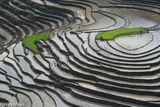 Lao Cai, Paddy, Vietnam