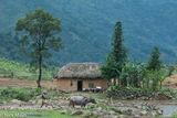 Hani, Lao Cai, Ploughing, Residence, Vietnam, Water Buffalo