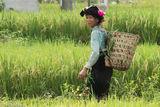 Backstrap Basket, Dai, Lai Chau, Paddy, Vietnam