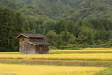 Chubu, Hut, Japan, Paddy