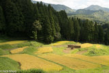 Chubu, Drying Rack, Japan, Paddy
