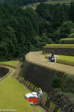 Harvesting, Japan, Kyushu, Paddy