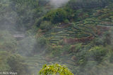 Mountainside Tea Plantation