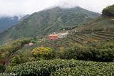 Tea Factory In Yunlin County