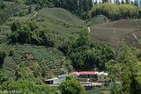 Courtyard Farmhouse & Tea Fields