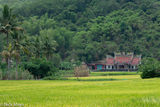 Rice Field & Temple