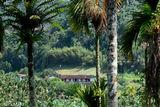 Farmhouse Through the Betel Trees