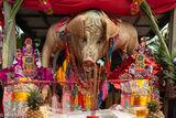 Shen Zhu (Holy Pig)