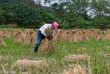 Farmer Stooking