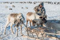 Malitsa,Nenets,Reindeer,Russia,Sledge,Yamalo-Nenets