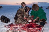 Dog,Meat,Nenets,Russia,Yamalo-Nenets