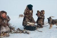 Dog,Firewood,Kisy,Malitsa,Nenets,Russia,Yagushka,Yamalo-Nenets