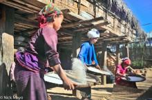 Bulang,China,Paddy,Winnowing,Yunnan