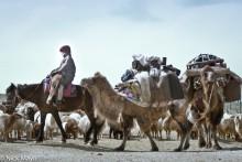 A Short Camel Train
