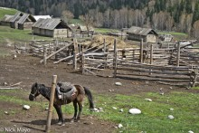 Cabin,China,Horse,Pen,Xinjiang