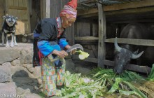 China,Dog,Fodder,Hat,Water Buffalo,Yao,Yunnan
