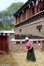 China,Flail,Sichuan,Threshing,Tibetan