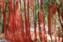 China,Prayer Flag,Sichuan