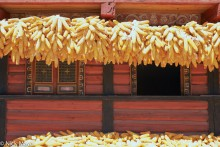 China,Corn,Drying,Residence,Sichuan