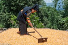 China,Corn,Guangxi,Raking,Yi