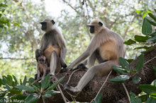 Gujarat,India,Monkey