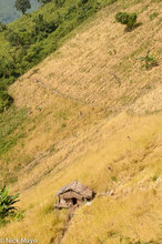 Hut,Laos,Paddy,Phongsali,Thatch