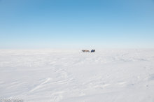 Sledge Crossing The Tundra