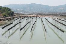 China,Drying,Fujian,Kelp