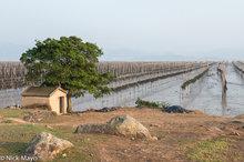 China,Drying,Fujian,Kelp,Shrine