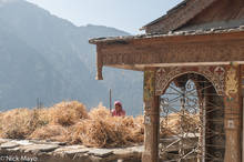 Himachal Pradesh,India,Threshing