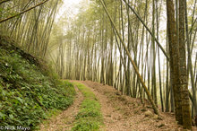 Meng Zong Bamboo Forest