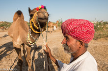 Camel & Owner At The Mallinath Fair