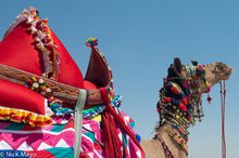 Camel,Festival,India,Rajasthan