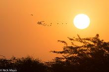 Bird,India,Rajasthan