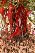 Sacred Tree & Terracotta Horses