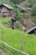 Miao,Stitching,Vietnam,Yen Bai