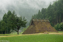 Thatched House By The Rice Field