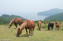 Chugoku,,Japan,Wild Horse