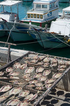 Fish Drying By The Harbour