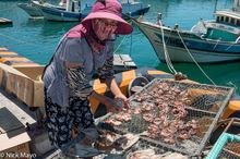 Boat,Fish Catch,Penghu,Taiwan