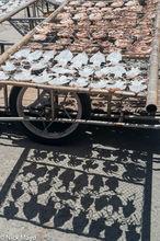 Fish Catch,Penghu,Taiwan