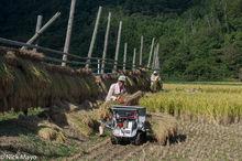 Chugoku,Drying Rack,Harvesting,Japan,Paddy