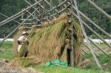 Chugoku,Drying Rack,Japan,Paddy