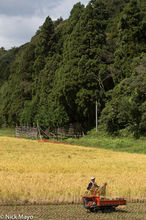 Chugoku,Harvesting,Japan,Paddy