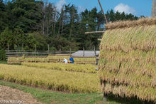 Drying Racks & Rice Field