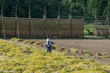 Chugoku,Drying Rack,Japan,Paddy,Raking