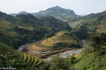 Rice Terraces In Morning Light