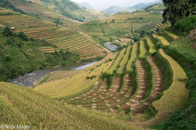 Valley Of Terraces At Harvest Time