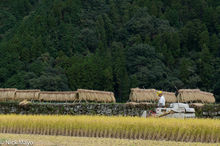 Drying Rack,Harvesting,Japan,Kyushu,Paddy