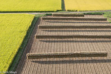 Drying Rack,Japan,Kyushu,Paddy